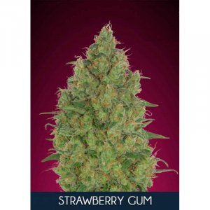 Strawberry Gum
