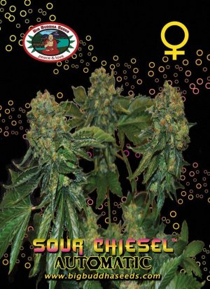 Sour Chiesel Auto